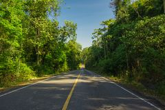 Road cut through the forest Royalty Free Stock Image