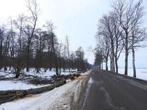 Road and cut old trees, Lithuania Royalty Free Stock Photos