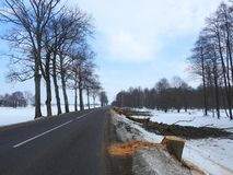 Road and cut old trees, Lithuania Stock Photo
