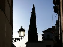 Road with cypress and lamppost stock photo