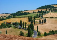 Road with cypress near Monticchiello in Tuscany. Winding cypress road near Monticchiello in Tuscany, Italy Royalty Free Stock Image