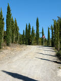 Road with cypresses royalty free stock images