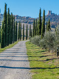 Road with cypresses. Charming countryside road with cypresses in the Val d'Orcia region (or Valdorcia) in Tuscany, Italy. UNESCO World Heritage Stock Photo