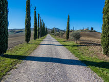 Road with cypresses. Charming countryside road with cypresses in the Val d'Orcia region (or Valdorcia) in Tuscany, Italy. UNESCO World Heritage Royalty Free Stock Image