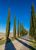 Tuscan cypresses. Charming countryside road with cypresses in the Val d'Orcia region (or Valdorcia) in Tuscany, Italy. UNESCO World Heritage Site Royalty Free Stock Photos