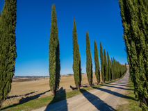 Tuscan cypresses. Charming countryside road with cypresses in the Val d'Orcia region (or Valdorcia) in Tuscany, Italy. UNESCO World Heritage Site Royalty Free Stock Images