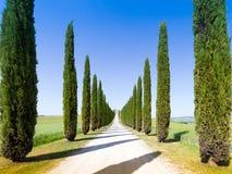 Road and cypresses in Crete Senesy Stock Photos