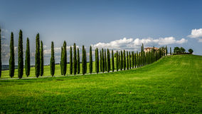 Road with Cypresses to agritourism in Tuscany Stock Photos