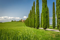 Road with Cypresses to agritourism in Tuscany Stock Photography