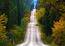 The road of cypresses Royalty Free Stock Images