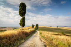 Road with cypresses in Tuscany Stock Images
