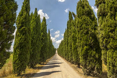 Road with cypresses in Tuscany Royalty Free Stock Images