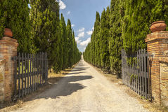 Road with cypresses in Tuscany Royalty Free Stock Photography
