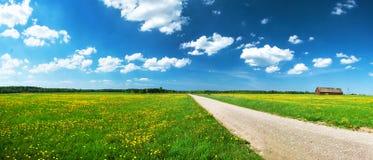 Road on dandelion field Royalty Free Stock Image