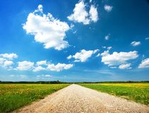 Road on dandelion field Royalty Free Stock Photography