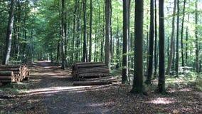 Danish forest autumn stock video footage