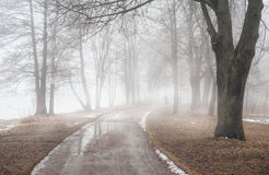 Road in dark foggy forest. Loneliness concept Stock Photography