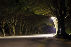 Road in dark forest Stock Images