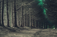 Road through dark forest in autumn Royalty Free Stock Image