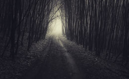 Road in dark forest on Halloween Stock Image