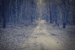 Road through a dark forest. Misty morgen forest. Stock Image