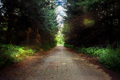 Road in dark forest Stock Photography