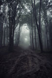 Road in dark haunted surreal forest with fog at night Stock Photo