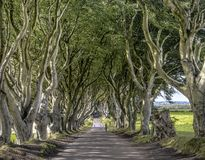 Road through the Dark Hedges alley, Armoy, Northern Ireland stock images