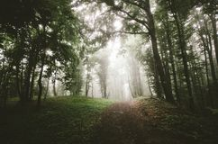 Road in dark spooky forest with fog on cold day Stock Photography