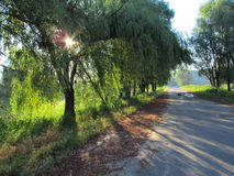 The road at dawn. Country road in the summer morning Royalty Free Stock Photos