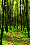 Road in deciduous forest Royalty Free Stock Photo
