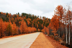 Road in Deep autumn Stock Photos