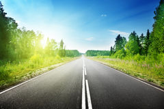 Road in deep forest Royalty Free Stock Photos