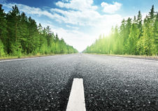 Road in deep forest royalty free stock photography
