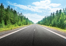 Road in deep forest Stock Images