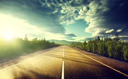 Road in deep forest royalty free stock images