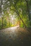 Way through the deep green forest. natural Rainforest background. Road through the deep green forest. natural Rainforest background royalty free stock photos