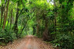 Road in deep jungle Stock Photo