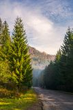 Road through deep spruce forest. Some haze in the distance. lovely autumn scenery in mountains. wonderful sunny morning. vertical Stock Image