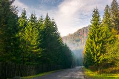Road through deep spruce forest. Some haze in the distance. lovely autumn scenery in mountains. wonderful sunny morning. horizontal Royalty Free Stock Image