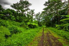 Road deep in the tropical dense forest Stock Image