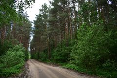 The road through the dense and gloomy taiga forest almost does not allow sunlight. Country road royalty free stock image