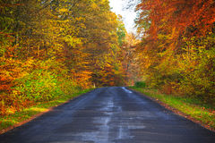 Road depths autumn forest trees colorful leaves. The road in the depths of an autumn forest: trees in colorful leaves Stock Images