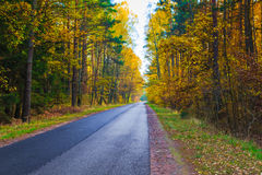 Road depths autumn forest trees colorful leaves Royalty Free Stock Photo