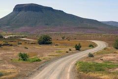 Road through desert in bloom Stock Photos