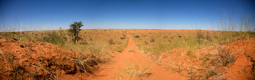 Road in the desert of Botswana Royalty Free Stock Images