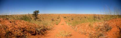 Road in the desert of Botswana. Road going towards a sunset over the Kalahari desert Royalty Free Stock Images
