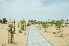 A road in the desert between small growing trees Stock Photography