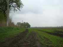 Road. Dirt road creeping along a plowed field in rainy weather Royalty Free Stock Images
