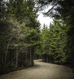 Road. Dirt road in the woods Stock Image